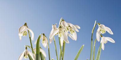 Flower, Petal, Flowering plant, Botany, Terrestrial plant, Spring, Wildflower, Plant stem, Pedicel, Iris,