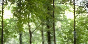 Nature, Natural environment, Photograph, Mammal, Forest, Sunlight, Outdoor recreation, People in nature, Woodland, Old-growth forest,