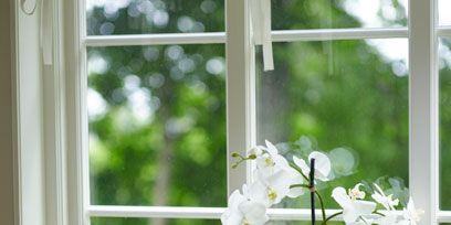 Flower, Glass, White, Flowerpot, Petal, Fixture, Flowering plant, Daylighting, Botany, Artifact,
