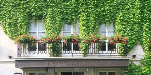 Plant, Building, Facade, Shrub, Door, Fixture, Flowerpot, House, Balcony, Home door,