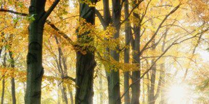 Nature, Wood, Deciduous, Natural landscape, Natural environment, Branch, Leaf, Tree, Forest, Sunlight,