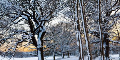 Winter, Branch, Freezing, Tree, Twig, Snow, Trunk, Precipitation, Fence, Home fencing,
