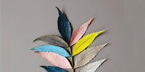 Colorfulness, Leaf, Feather, Botany, Close-up, Natural material, Macro photography,