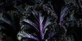Nature, Leaf, Purple, Violet, Botany, Terrestrial plant, Darkness, Black, Monochrome photography, Black-and-white,