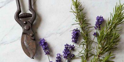 Lavender, Purple, Flowering plant, Lavender, English lavender, Pedicel, Needlework, Egyptian lavender, Chain, French lavender,