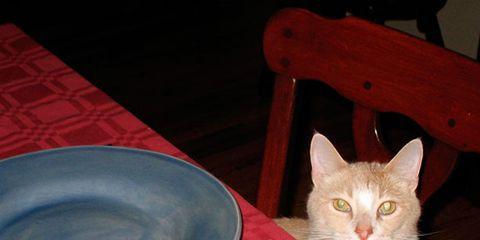 Dishware, Felidae, Cat, Whiskers, Small to medium-sized cats, Serveware, Carnivore, Cutlery, Kitchen utensil, Tableware,