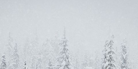 Branch, Winter, Natural environment, Freezing, Atmospheric phenomenon, Monochrome photography, Woody plant, Twig, Monochrome, Snow,