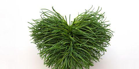 Vascular plant,
