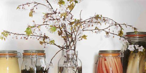 Branch, Mason jar, Twig, Food storage containers, Artifact, Drinkware, Interior design, Vase, Centrepiece, Home accessories,