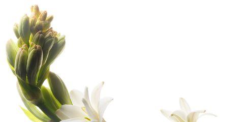 Flower, Petal, Leaf, Botany, Flowering plant, Bud, Plant stem, Terrestrial plant, Pedicel, Spring,