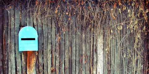 Wood, Green, Winter, Colorfulness, Freezing, Turquoise, Teal, Snow, Tints and shades,