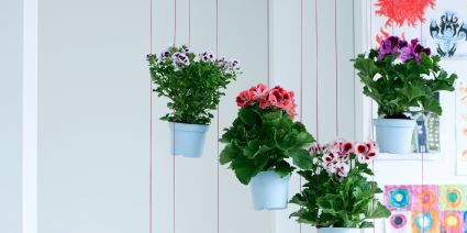Flowerpot, Plant, Flower, Petal, Interior design, Floristry, Flower Arranging, Floral design, Houseplant, Vase,