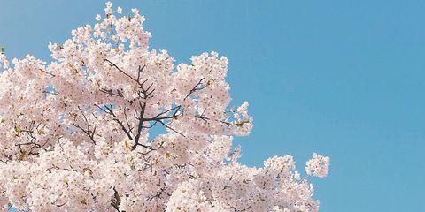 Blue, Daytime, Branch, Flower, Organism, White, Petal, Blossom, Woody plant, Beauty,