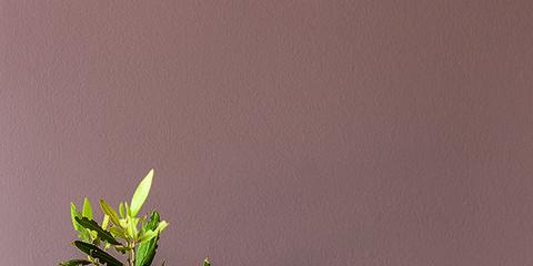 Green, Leaf, Serveware, Still life photography, Botany, Twig, Artifact, Vase, Photography, Still life,