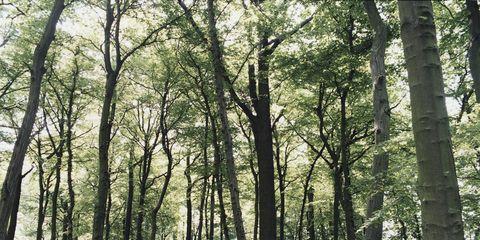 Nature, Vegetation, Natural environment, Green, Wood, Natural landscape, Deciduous, Tree, Forest, Woodland,