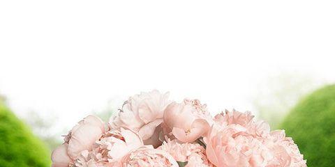 Petal, Bouquet, Flower, Cut flowers, Pink, Floristry, Flowering plant, Flower Arranging, Centrepiece, Artifact,
