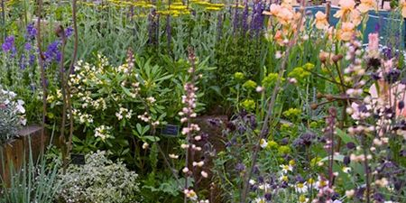 Plant, Flower, Garden, Shrub, Flowering plant, Wildflower, Lavender, Groundcover, Meadow, Subshrub,
