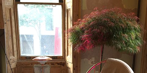 Toilet, Toilet seat, Flowerpot, Plumbing fixture, Interior design, Ceramic, Porcelain, Daylighting, Wicker, Armrest,