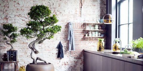 Flowerpot, Interior design, Bonsai, Sageretia theezans, Trunk, Houseplant, Still life photography, Shelving, Pottery, Shelf,