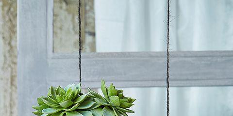 Leaf, Flowerpot, Botany, Interior design, Terrestrial plant, Fixture, Houseplant, Succulent plant, Pebble, Annual plant,