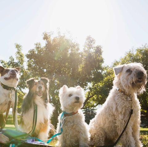 home bargains pet water cooler