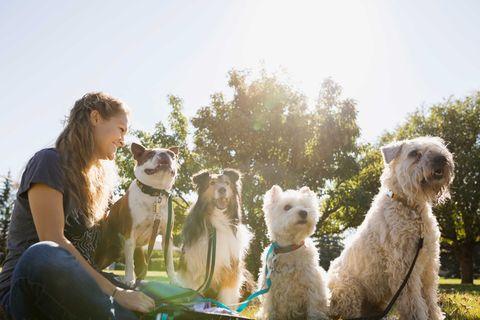 Mammal, Vertebrate, Dog, Canidae, Dog breed, Fun, Carnivore, Companion dog, Grass, Terrier,