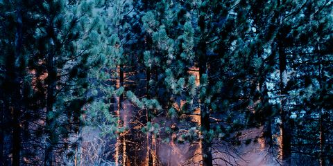 Natural environment, Natural landscape, Forest, Woody plant, Ecoregion, Woodland, Grove, Nature reserve, Biome, Spruce-fir forest,