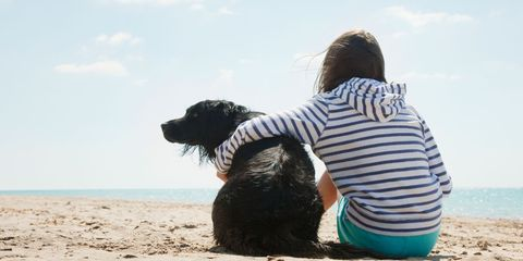 Dog breed, Carnivore, Dog, Sand, Mammal, T-shirt, People in nature, Beach, Sporting Group, Back,