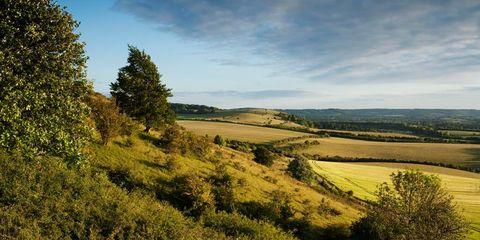 Vegetation, Nature, Natural environment, Natural landscape, Plant community, Landscape, Plain, Grassland, Field, Ecoregion,