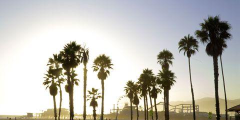 Sunlight, Woody plant, Arecales, People on beach, Sand, Shade, Beach, Palm tree, Shadow, Tropics,