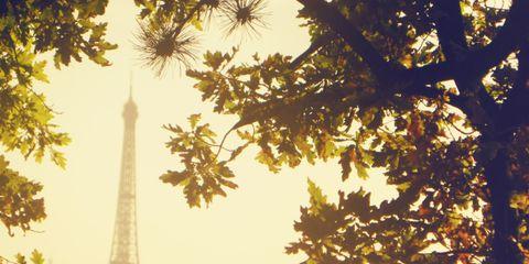 Branch, Yellow, Atmospheric phenomenon, Leaf, Twig, Street light, Tower, Amber, Woody plant, Landmark,