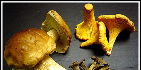 Yellow, Ingredient, Artifact, Bolete, Mushroom, Still life photography, Bronze, Penny bun, Agaricaceae, Natural material,