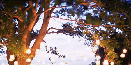 Branch, Deciduous, Twig, Trunk, Autumn,