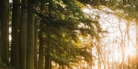 Tree, Nature, People in nature, Natural landscape, Forest, Sunlight, Natural environment, Woodland, Light, Old-growth forest,