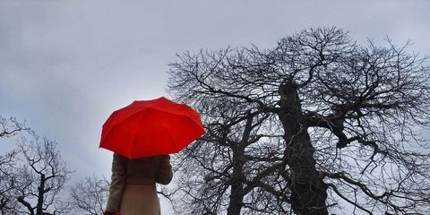 Branch, Twig, Tree, Winter, Woody plant, Carmine, Trunk, Deciduous, Coquelicot, Woodland,