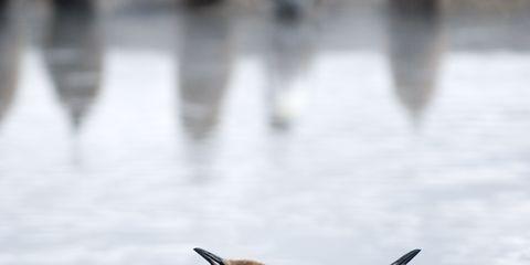 Body of water, Water resources, Reflection, Beak, Watercourse, Bird, Liquid, Adaptation, Bank, Reservoir,