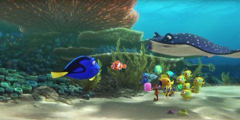 Organism, Underwater, Vertebrate, Fish, anemone fish, Marine biology, Fin, Coral, Aqua, Majorelle blue,