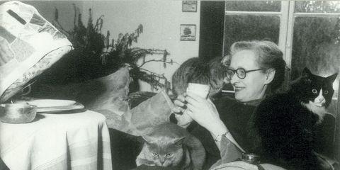 Vision care, Glasses, Vertebrate, Tablecloth, Small to medium-sized cats, Carnivore, Fur, Cat, Felidae, Serveware,