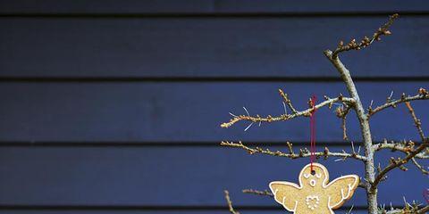 Twig, Christmas decoration, Ornament, Christmas, Siding, Christmas eve, Holiday ornament, Christmas tree, Holiday, Christmas lights,