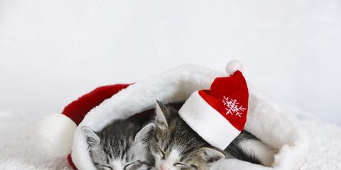 Winter, Textile, Red, Carnivore, Small to medium-sized cats, Cat, Felidae, Snow, Costume accessory, Carmine,