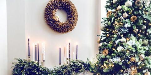 Blue, Room, Dog breed, Interior design, Interior design, Christmas decoration, Dog, Carnivore, Home, Holiday,