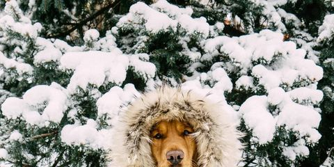 Winter, Jacket, Snow, Textile, Parka, Freezing, Playing in the snow, Fur, Fur clothing, Toy,