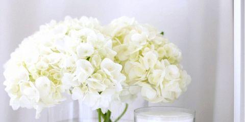 Flower, Petal, Bouquet, Cut flowers, Font, Flowering plant, Flower Arranging, Artifact, Floristry, Vase,