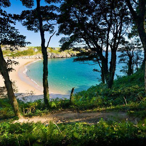 Nature, Tree, Water, Vegetation, Sky, Shore, Natural environment, Sea, Coast, Azure,