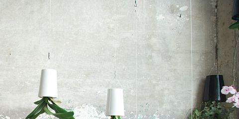 Green, White, Leaf, Room, Lighting accessory, Tree, Plant, Interior design, Interior design, Pine,