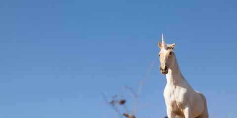 Daytime, Sky, Horse, Ecoregion, Sunlight, Terrestrial animal, Working animal, Twig, Stallion, Mustang horse,