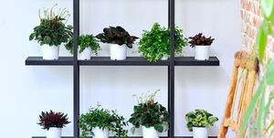 How to use house plants in small spaces