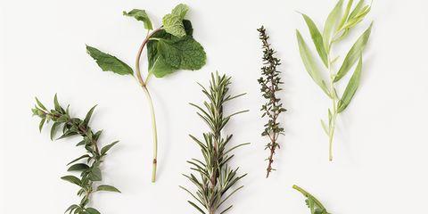 Leaf, Botany, Flowering plant, Plant stem, Herb, Drawing, Perennial plant, Pedicel, Annual plant, Herbal,