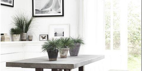 Plant, Flowerpot, Table, Room, Interior design, Interior design, Picture frame, Rectangle, Grey, Houseplant,