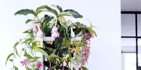 Serveware, Flower, Dishware, Purple, Petal, Botany, Violet, Lavender, Ceramic, Porcelain,